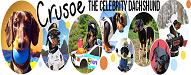celebrity dachshund