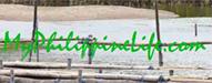 myphilippinelife.com