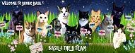 Top Cat Blogs 2020 | Bionic Basil